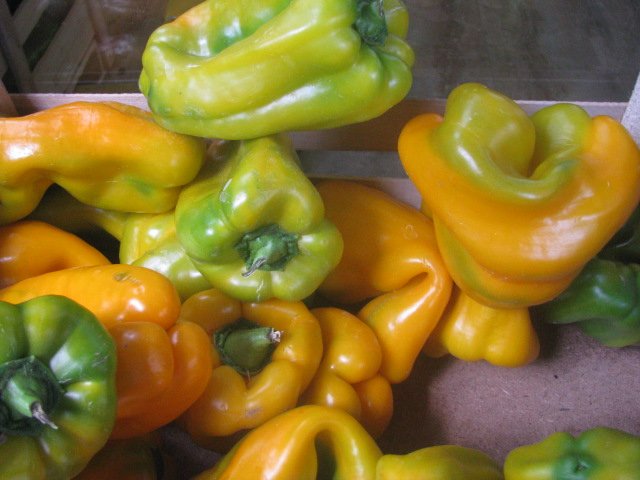 Sweet Peppers - copyrights incl. electronic by E. M. Giacon Castleman