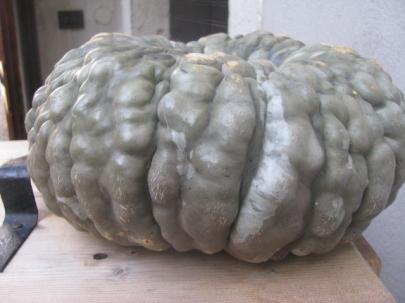Pumpkin for gnocchi, risotto, ravioli, tortelloni, cappellacci and tortellacci