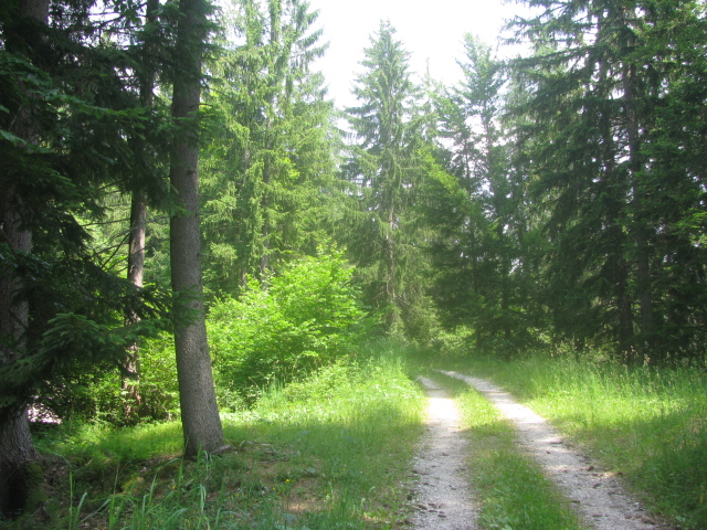 Forest trail in the Val di Non - near Rumo