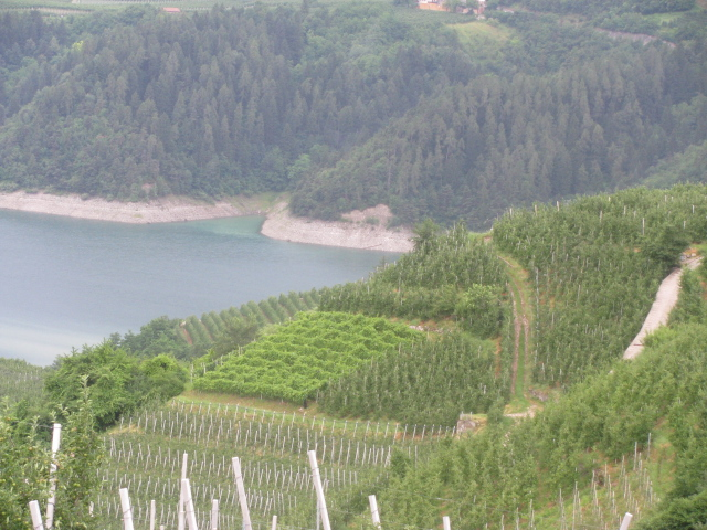 Groppello growing area, Revo' Val di Non