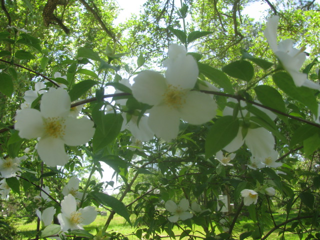 Southern Dogwood - Copyrights incl. electronic - Culinary Roots 2016.
